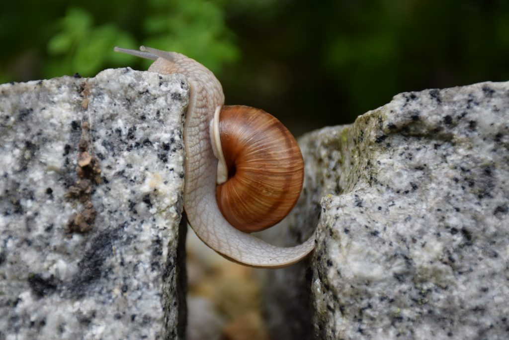 uncover gaps and needs in marketing, a snail moving from one stone to another